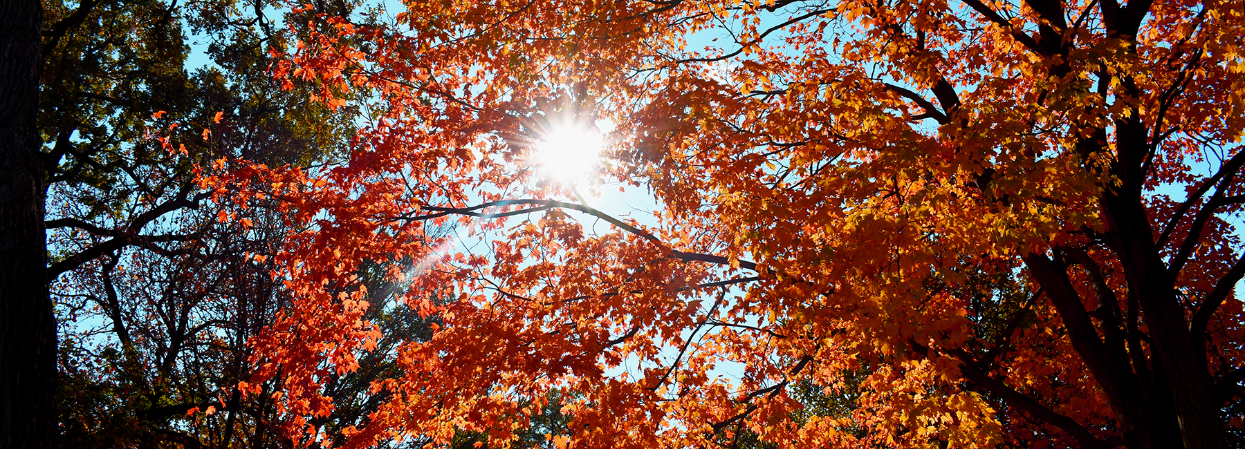 Sun peering through fall leaves