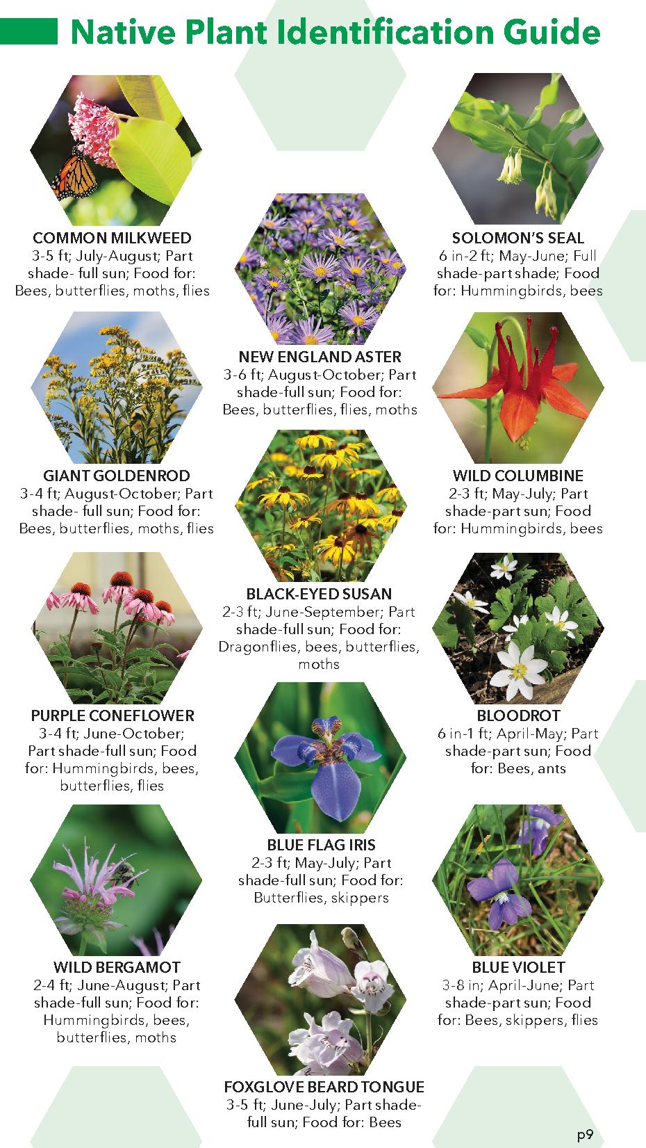 native garden guide