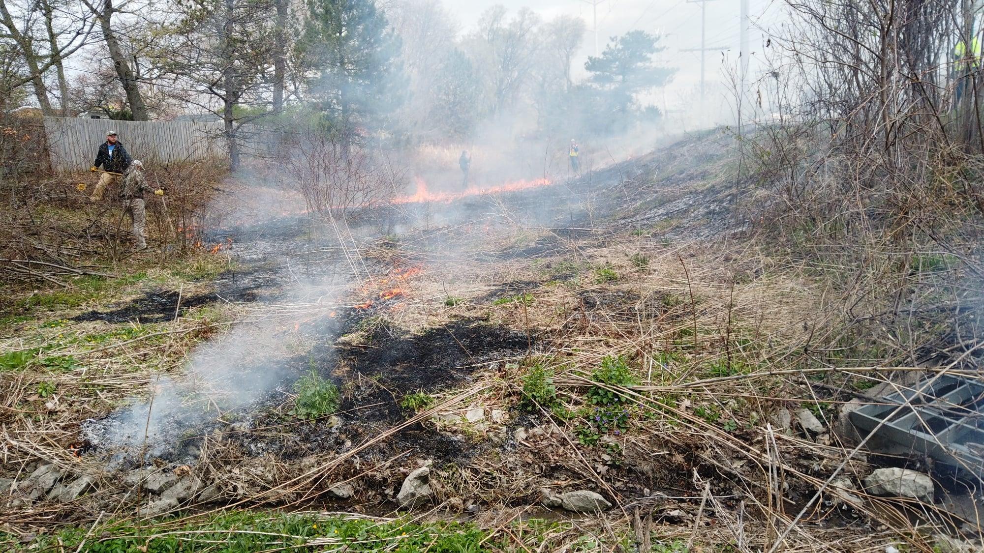 Smokey Vegetation